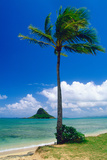 Kaneohe Bay Palm Tree, Hawaii Reproduction photographique par George Oze