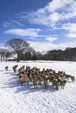Welsh Winter Landscape Impressão fotográfica por Charles Bowman