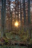 Heron Pond Sunrise Impressão fotográfica por Steve Gadomski