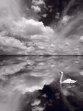 Swan Lake Explorations BW Photographic Print by Steve Gadomski