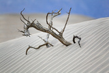 Tree Buried in the Sand, Death Valley, CA Photographic Print by George Oze