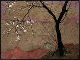 Plum Tree against a Colorful Temple Wall Framed Canvas Print by Raymond Gehman