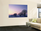 Willow Trees at Dusk in Winter, Cache Valley, Great Basin, Utah, USA Wall Mural by Scott T. Smith