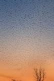 Mississippi Flyway Impressão fotográfica por Steve Gadomski
