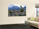 Yuccas Below Snow Covered Cliffs & Clearing Winter Storm, Red Rock Canyon, Nevada, USA Wall Mural by Scott T. Smith