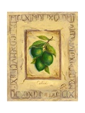 Italian Fruit Limes Giclee Print by Marilyn Dunlap