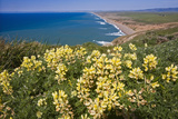 Spring Vista, Point Reyes, California Photographic Print by George Oze