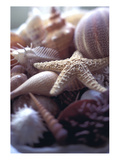 Tropical Shells Photographic Print by Michele Wesmoreland