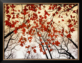 Bare Branches and Red Maple Leaves Growing Alongside the Highway Framed Photographic Print by Raymond Gehman
