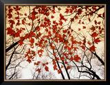 Ramas desnudas y hojas rojas de arce junto a la autopista Lámina fotográfica enmarcada por Raymond Gehman