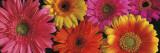 Janel Pahl - Simply Spring - Art Print