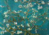 花咲くアーモンドの枝 1890年 ポスター