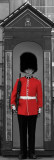 Buckingham Palace Guard - London Prints