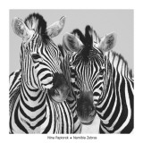 Namibia Zebras Prints by Nina Papiorek