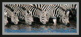 Kenya, Zebra Prints by Manoj Shah