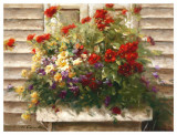 Cape Cod Window Box Prints by Ian Cook