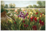 Fields of Iris Prints by Ian Cook