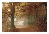 Autumn Dream Kunst von Toni Vila