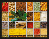 Gastronomy - Spices Print