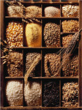 Grains and Rice Posters by Ricter 