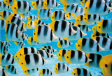 Acquarium, Bora, Bora Prints by Art Wolfe