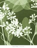 Eucalyptus Buds I Prints by Steven N. Meyers