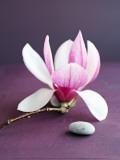 Magnolia et Caillou Prints by Amelie Vuillon