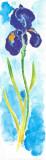 Acuarelas Flores Vertic I Prints by  Faro