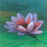 Waterlily I Prints by Cano 