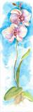 Acuarelas Flores Vertic III Prints by  Faro