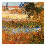 Jardin Fleuri A Arles Posters av Vincent van Gogh