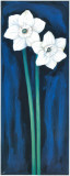 Narcissus In Blue I Posters by Ferrer 