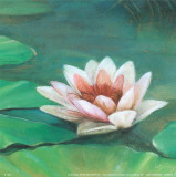 Waterlily II Print by Cano 