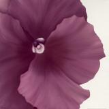 Violet Flower II Art by Yvonne Poelstra-Holzhaus