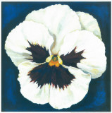 Pansy White Print by  Urpina
