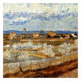 La Plaine De La Crau Avec Pêchers En Fleurs Posters by Vincent van Gogh