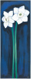 Narcissus In Blue II Art by Ferrer 