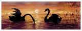 Swans In The Sunset Art by  Werner