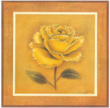Yellow Roman Rose Prints by Lewman Zaid