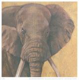 Elephant Prints