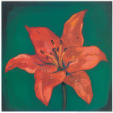Red Lily Prints by  Urpina