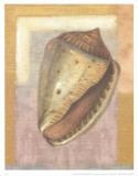 Caracolas Art by A. Lopez