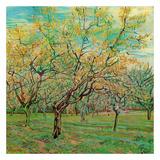 Verger Avec Pruniers En Fleurs Print by Vincent van Gogh