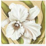 White Flower Prints by L. Romero