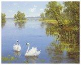Swans On The Lake Posters by  Slava