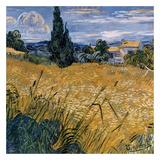 Champ De Blé Vert Avec Cypres Posters by Vincent van Gogh