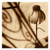 Sepia Flower Posters by Jean-François Dupuis