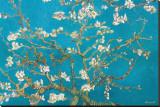 Branches d'amandier en fleurs, Saint-Rémy, 1890 Reproduction transférée sur toile par Vincent van Gogh