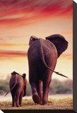 Elephant Walking with Calf Stretched Canvas Print