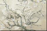 Branches d'amandier en fleurs, Saint-Rémy, vers1890 - tonalité brun beige Reproduction transférée sur toile par Vincent van Gogh